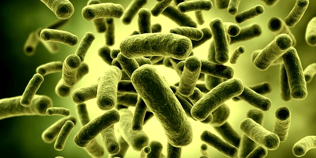 Chlamydien sind unsichtbare Bakterien