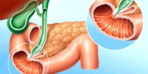 Bauchspeicheldrüse zwischenm Magen Darm Milz