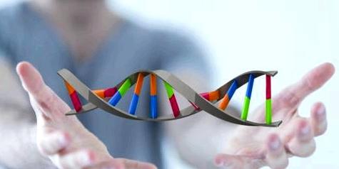 Degeneration des Y-Chromosoms
