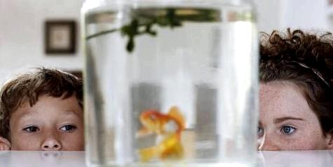 Kinder schauen in ein Goldfischglas