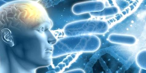 Grafik eines menschlichen Gehirns