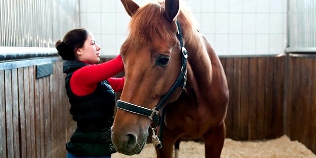 Legastheniker erlernen häufig lieber praktische Berufe wie Pferdewirtin