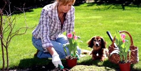 Hexenschuss tritt häufig nach Gartenarbeit in gebückter Haltung auf