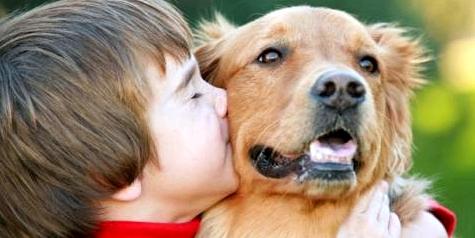Flöhe können von Hunden auf den Menschen übertragen werden