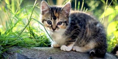 augenkrankheiten-sehschwaechen-simulation-bildergalerie-beispielbild-katzenbaby
