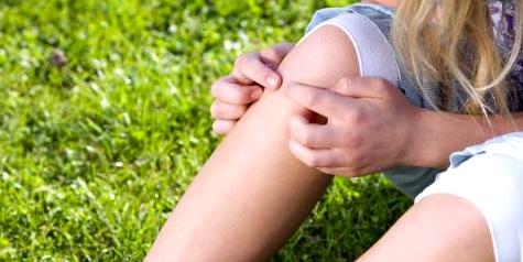 Vorsicht beim Picknick im hohen Gras. Zecken krabbeln die Beine hinauf