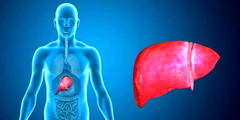 Die Grafik einer Bauchspeicheldrüse