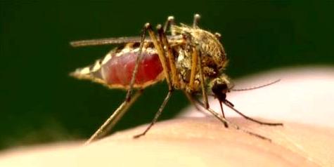 Was hilft gegen den Juckreiz eines Mückenstichs?